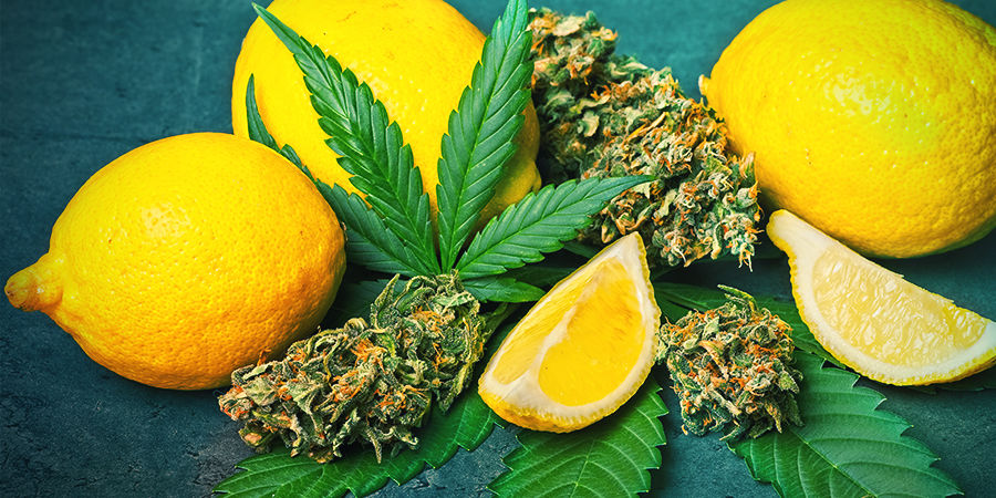 Limoneen In Cannabis