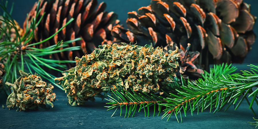 Pineen In Cannabis