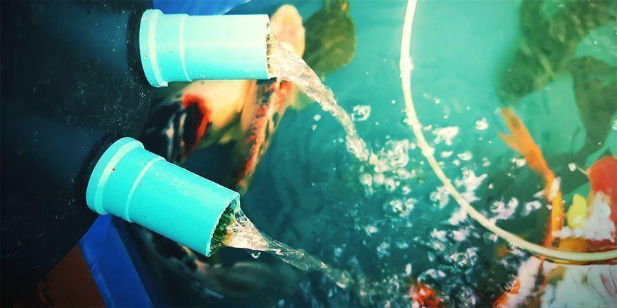 Voeg De Vissen Toe