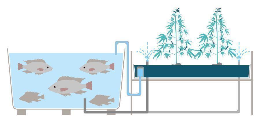 Wat Is Aquaponics?