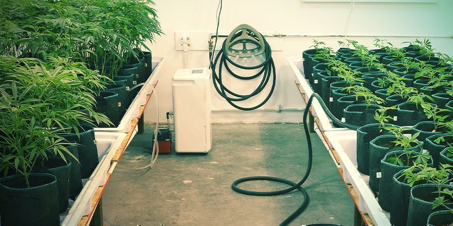 Houd alles goed schoon - Verticaal Wiet Kweken