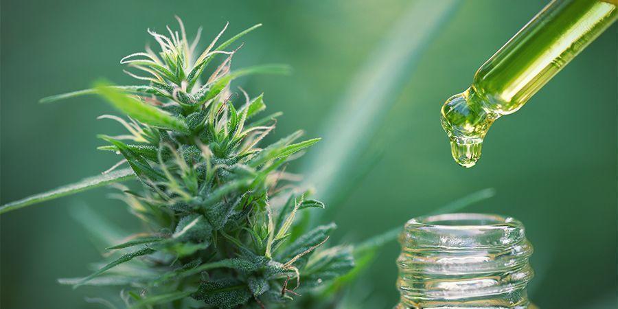 Edibles van Cannabisconcentraten: bereken de juiste dosis
