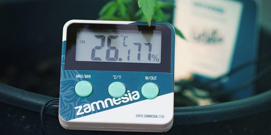 Factoren Die De Bloei Van Wietplanten Kunnen Beïnvloeden: Omgevingstemperatuur