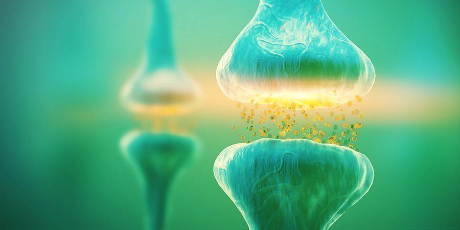 Waarom is anandamide belangrijk?