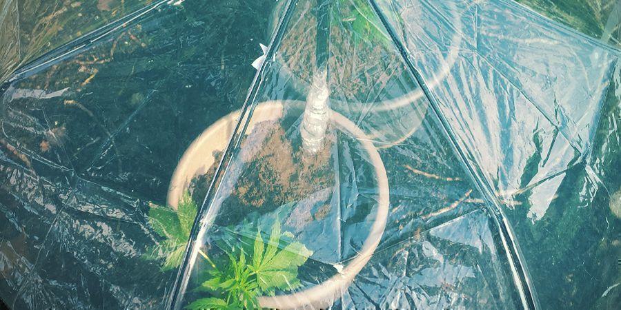 Hoe Geef Je Wietplanten Water Als Je Niet Thuis Bent - Je eigen bewateringssysteem