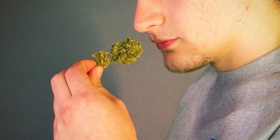 Verontreinigde wiet herkennen: ruik aan je wiet en proef het voordat je het gaat roken