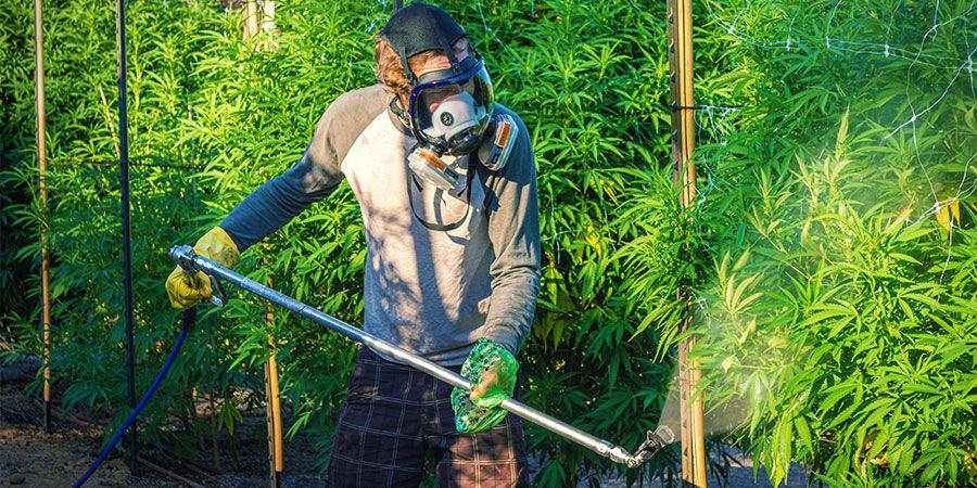 Soorten verontreinigingen in cannabis: Industriële pesticiden en meststoffen