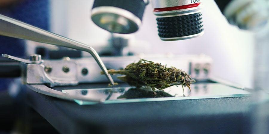 Soorten verontreinigingen in cannabis: Lood