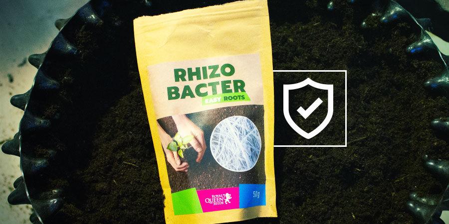 Hoe beschermen rhizobacteriën je wietplanten?