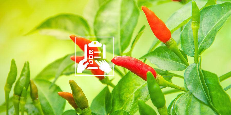 Pepers Kweken Voor Beginners: Maak kweekplan