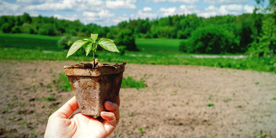 Pepers Kweken Voor Beginners: Laat zaailingen afharden