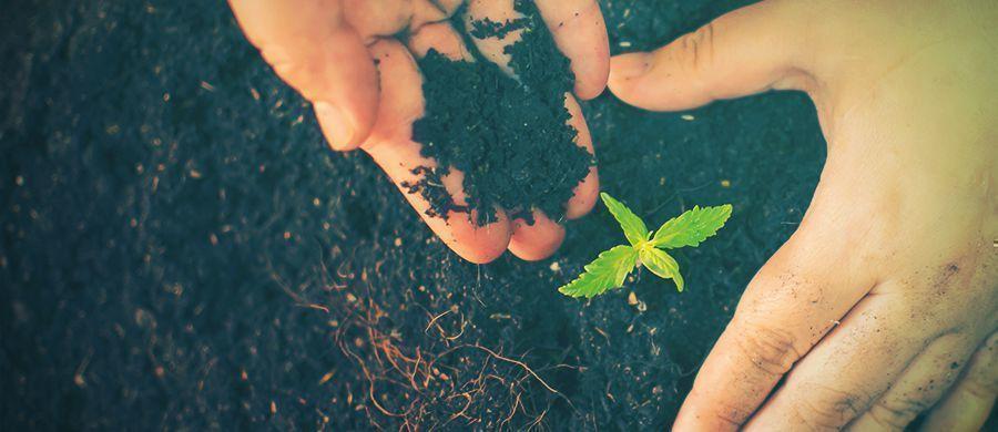 r/cannabiscultivation: Alles Wat Je Moet Weten Over Wiet Telen