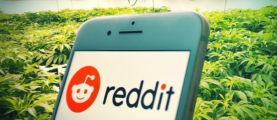 Hoe en waarom stoners Reddit kunnen gebruiken als informatiebron