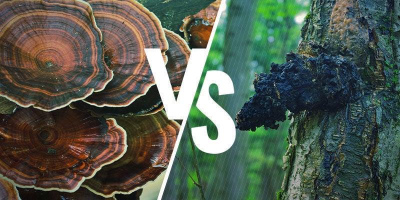 Hoe verhoudt Reishi zich tot andere adaptogene paddenstoelen