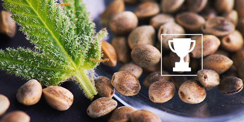 de beste regular zaden voor kwekers en breeders