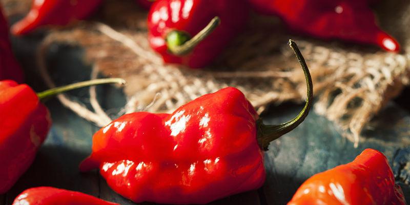 Begin Vandaag Nog Met Het Kweken Van De Ghost Pepper