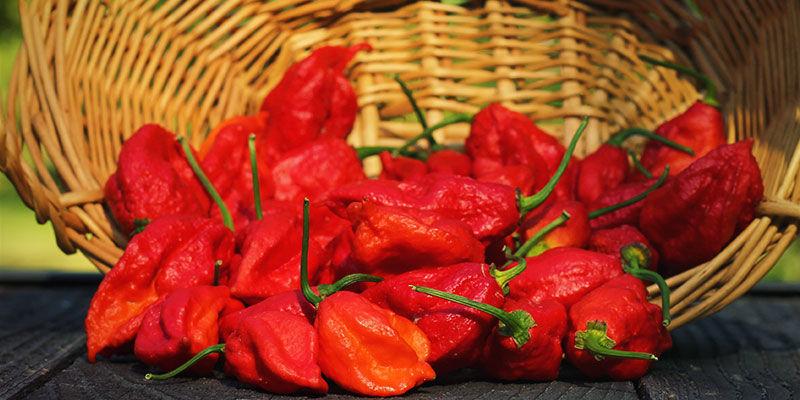 Wat Is Een Ghost Pepper?