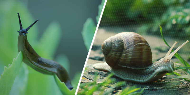 Zijn Slakken En Naaktslakken Hetzelfde?