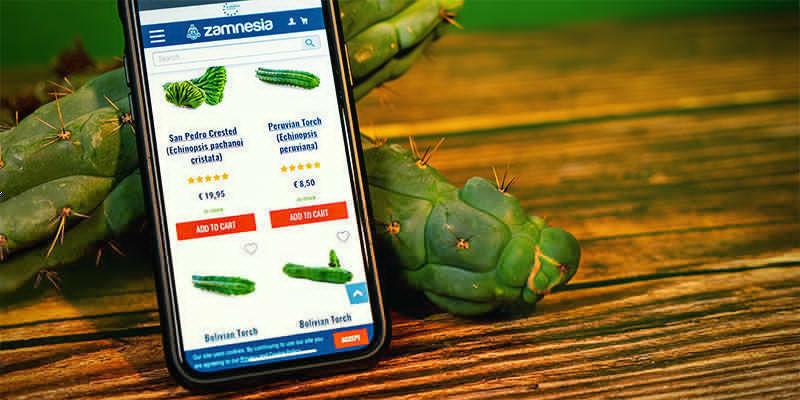 Waar Koop Je Echinopsis Zamnesiana?