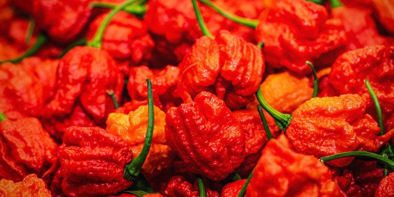 Heetste Pepers: Infinity Pepper
