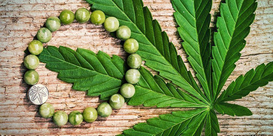 Hennep is Hip: een Plant met Honderdduizenden Toepassingen