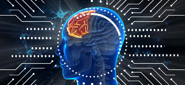 neurogenese in de hersenen van volwassenen