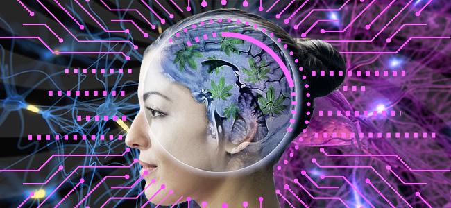cannabis beïnvloedt inderdaad neurogenese