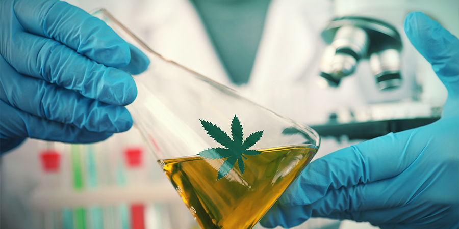 Autoflowering cannabis wordt steeds beter
