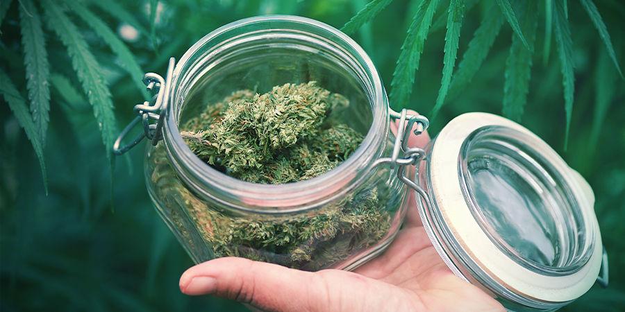 Wat Moet Je Nog Meer Over autoflowering cannabis Weten?