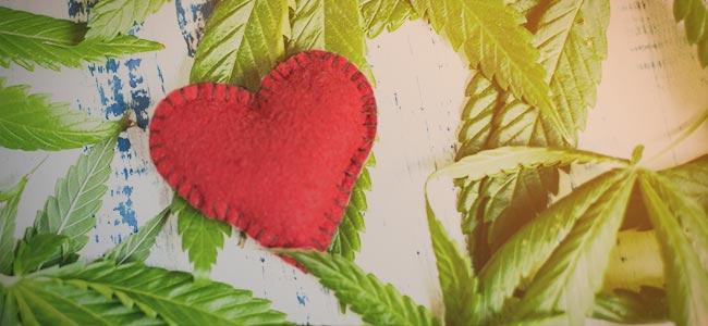 Je ontwikkelt een relatie met de cannabis plant