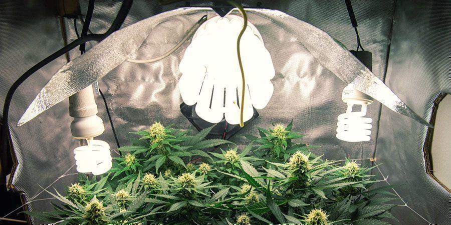 CFL-/T5-verlichting - Wietplanten