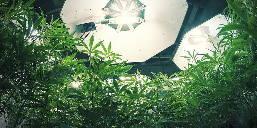 HID-verlichting - Wietplanten