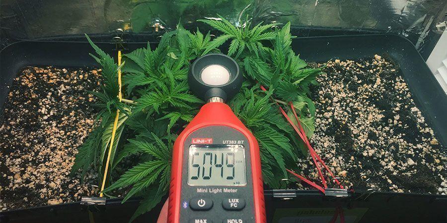 Gebruik Een Luxmeter Of PAR-Meter - Wietplanten