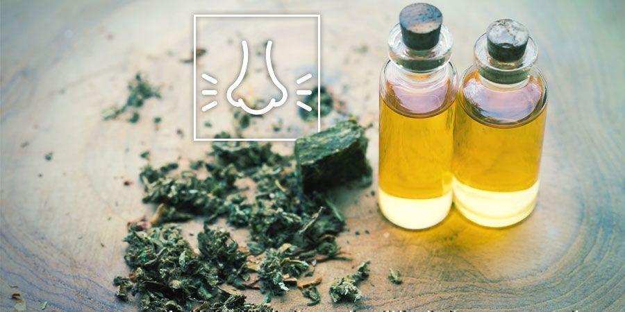 Ontspannen met cannabis: Denk na over de terpenen
