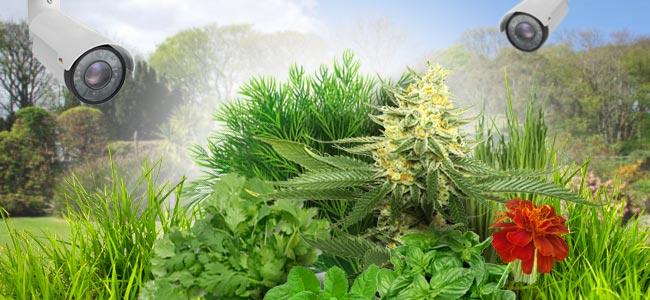 Tips Voor Tuin-kwekers