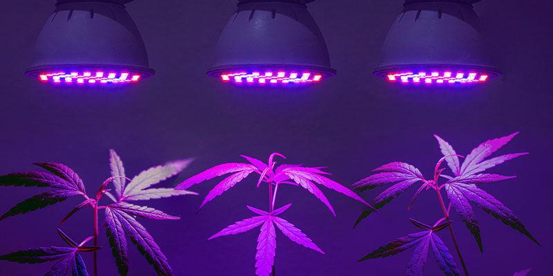 Heb Je Voor Wiet Speciale UV-lampen Nodig?