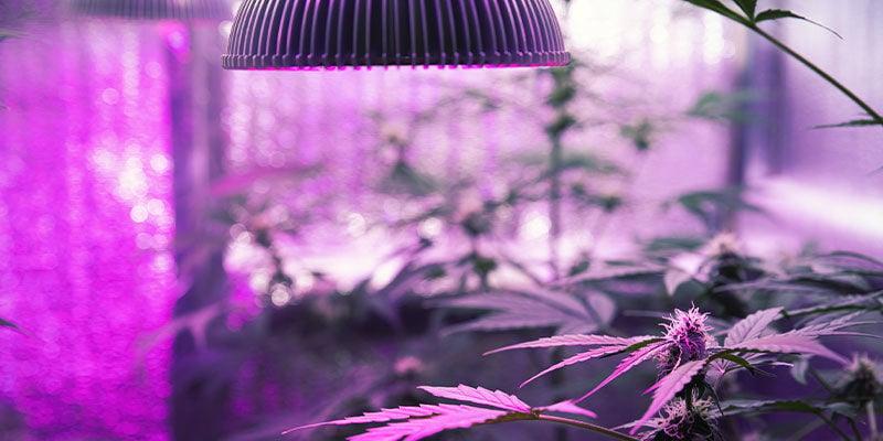 Hoe Kun Je Planten UV-licht Geven?