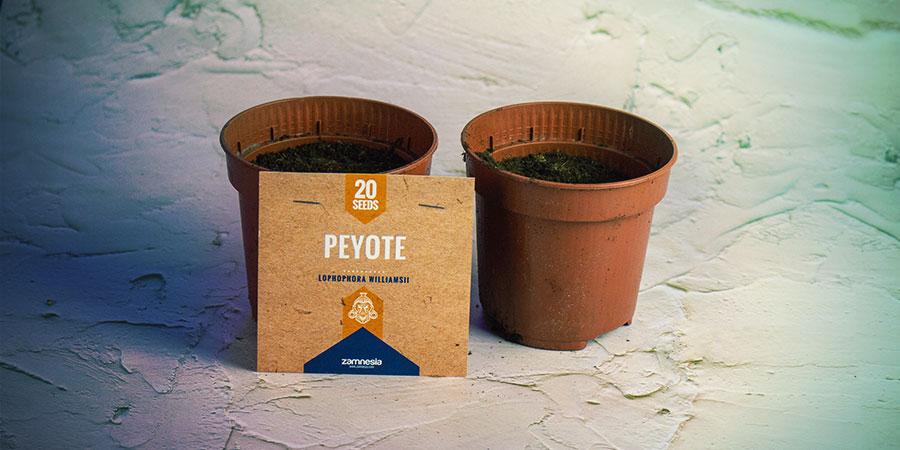 Plant De Mescaline Cactuszaden