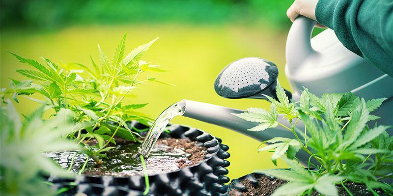 wietplanten overdosis silica