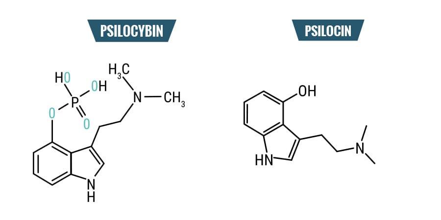 Psilocybine vs. Psilocine