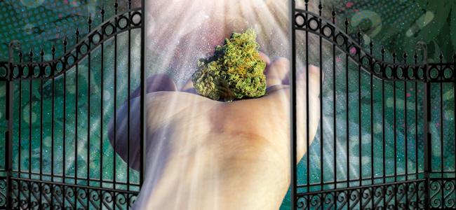 Marihuana Is De Springplank Naar Zwaardere Drugs