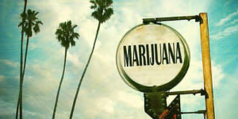 OG Kush Cannabis: Geboren en getogen in Florida?