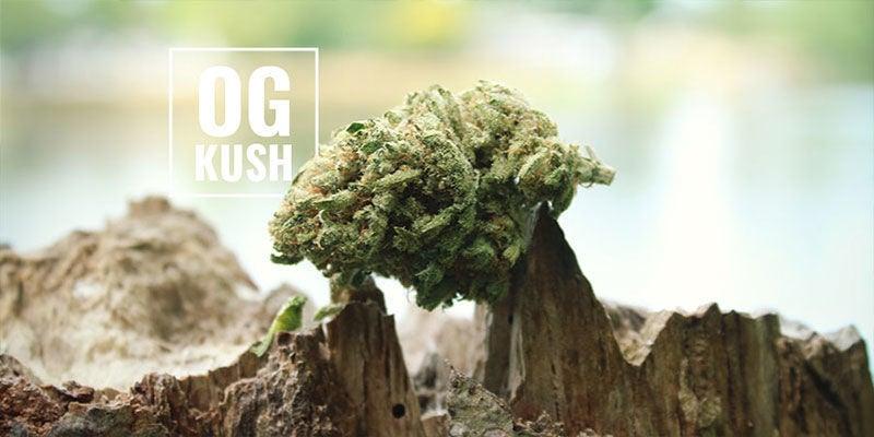 OG Kush Cannabis: Wat betekent OG?