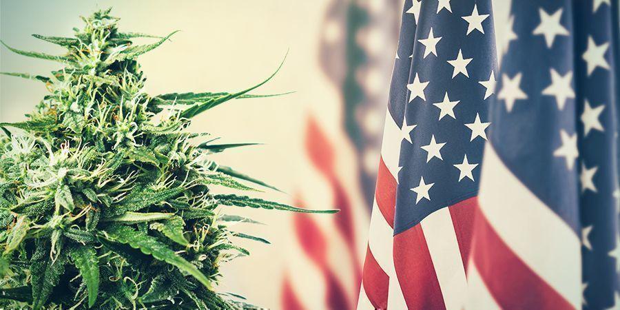 Cannabis: VAN BELASTINGHEFFING NAAR VERBODSBEPALING