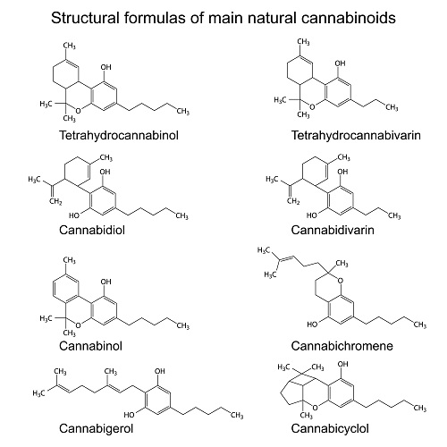 Main cannabinoids