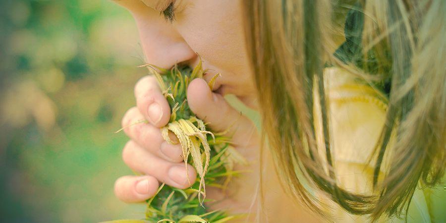 Cannabis - Ruik Het!
