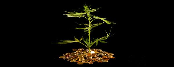 Cannabis lage kosten