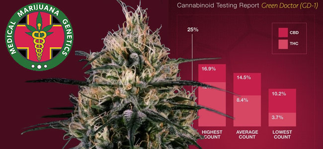 Green Doctor Medical Marijuana Genetics