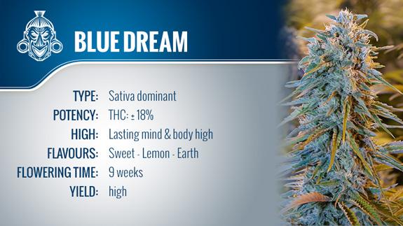 Blue Dream (Humboldt Seeds) Fem.