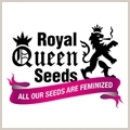 Blue Cheese (Royal Queen Seeds) Fem.